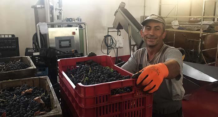 uve per vini del Monferrato NIKOLOV con le cassette