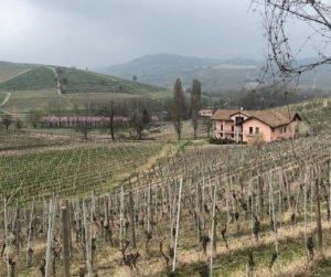 colline del Monferrato con vigneti
