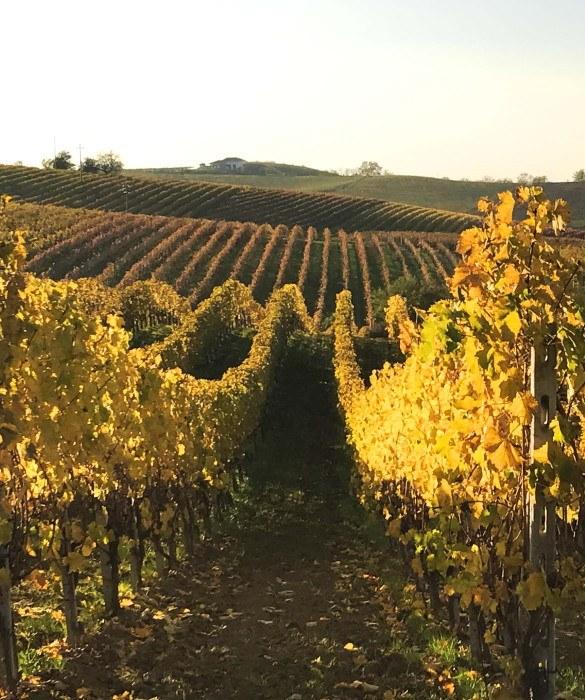 Le territoire Piedmont - Italy